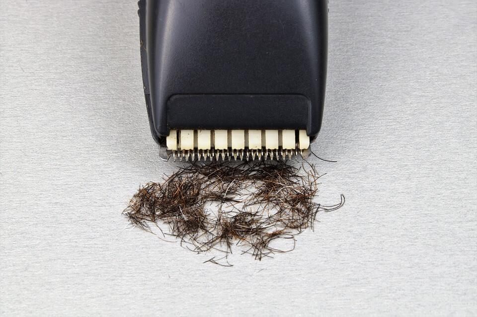 beültetett haj
